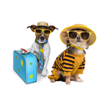 Pets-Category-Reviews
